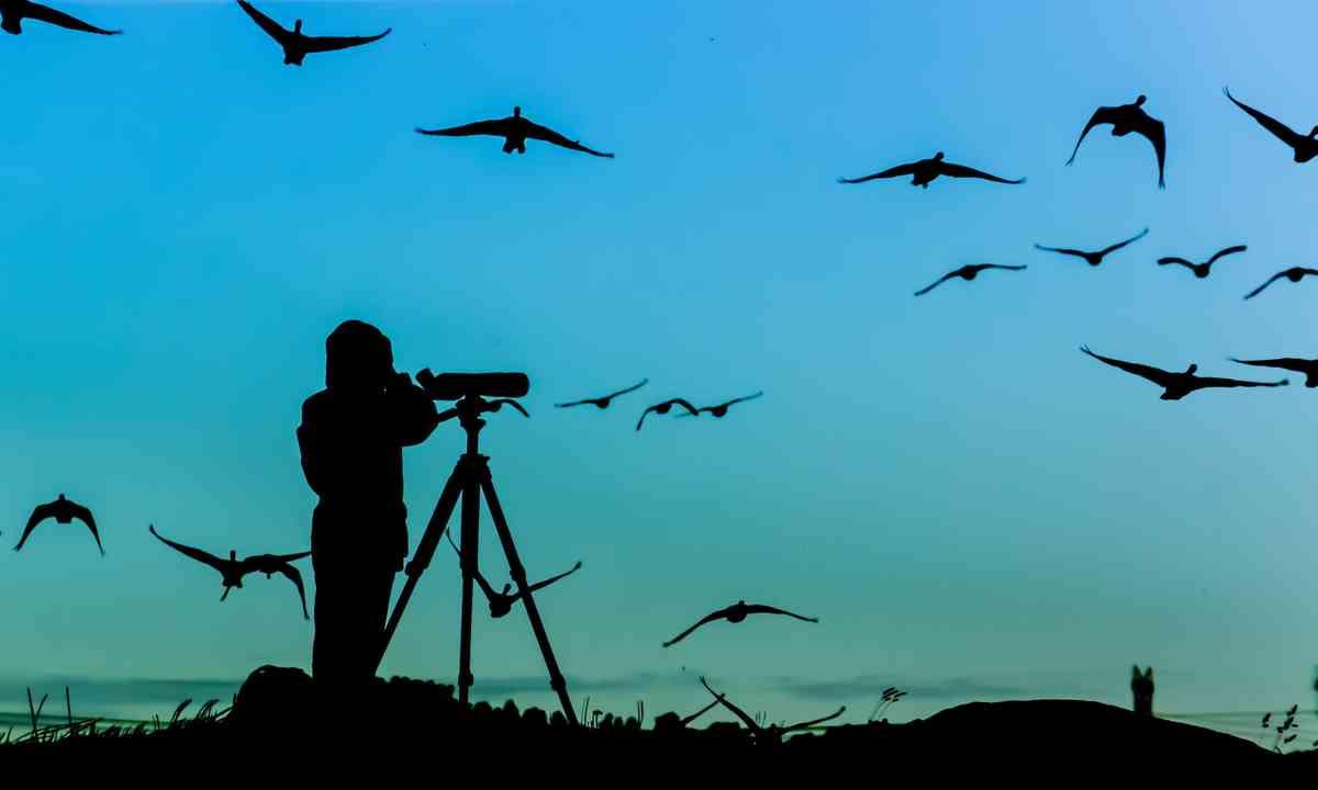 Silhouette of birdwatcher (Shutterstock.com)