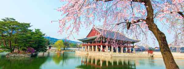 Cherry blossoms over Gyeongbokgung Palace (Shutterstock: see credit below)