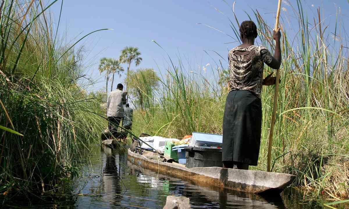 Poling through the Okavango Delta (Dreamstime)