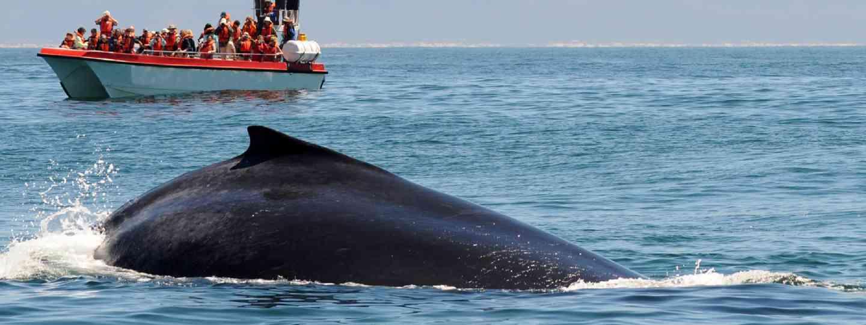 Whale swimming near tropical island (Shutterstock.com. See main credit below)