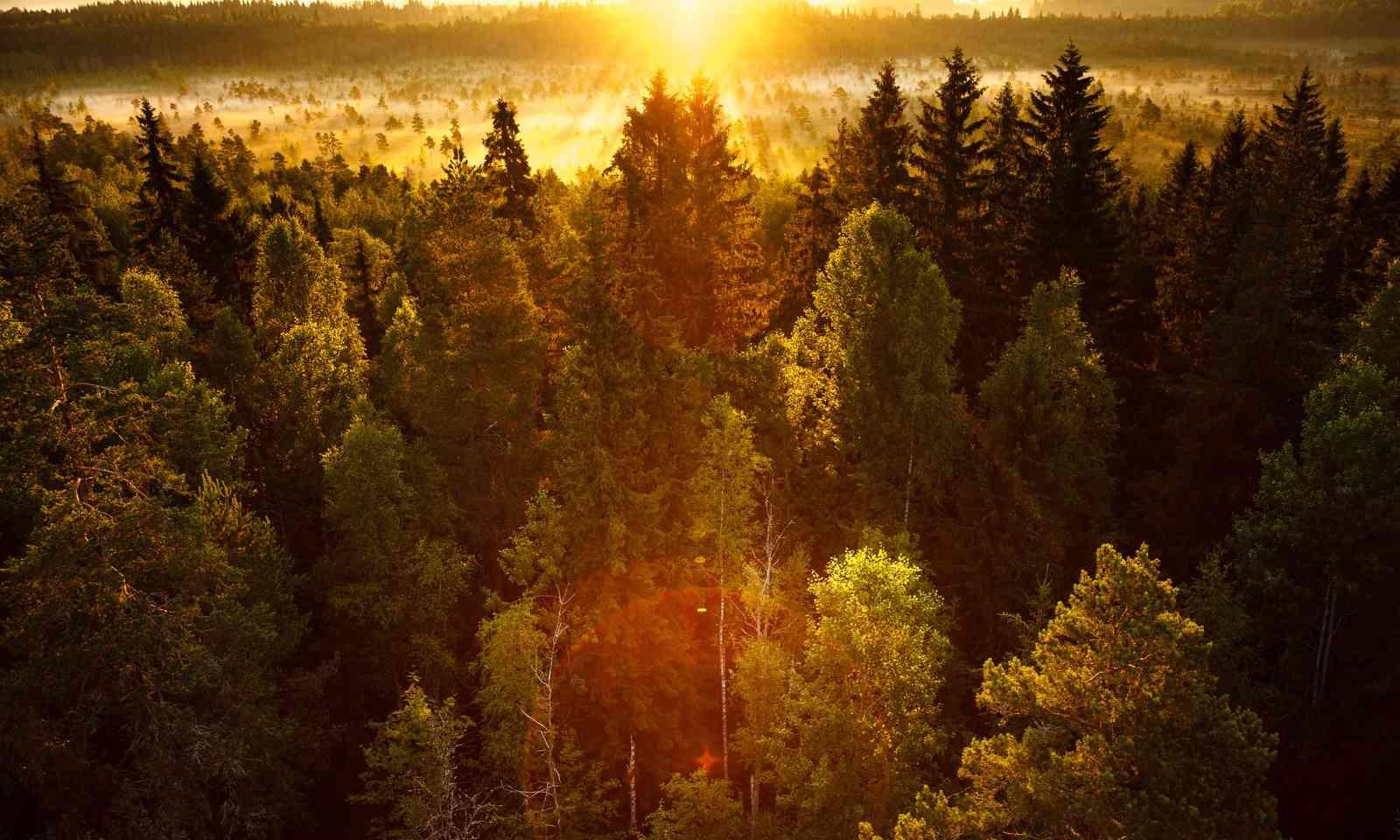 Autumnal forest (Shutterstock.com)
