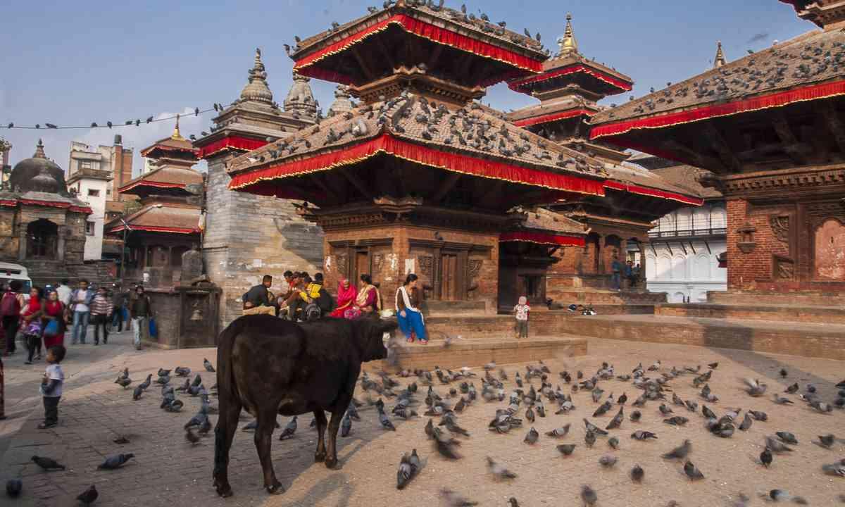 Cow in Durbar Square (Shutterstock.com)