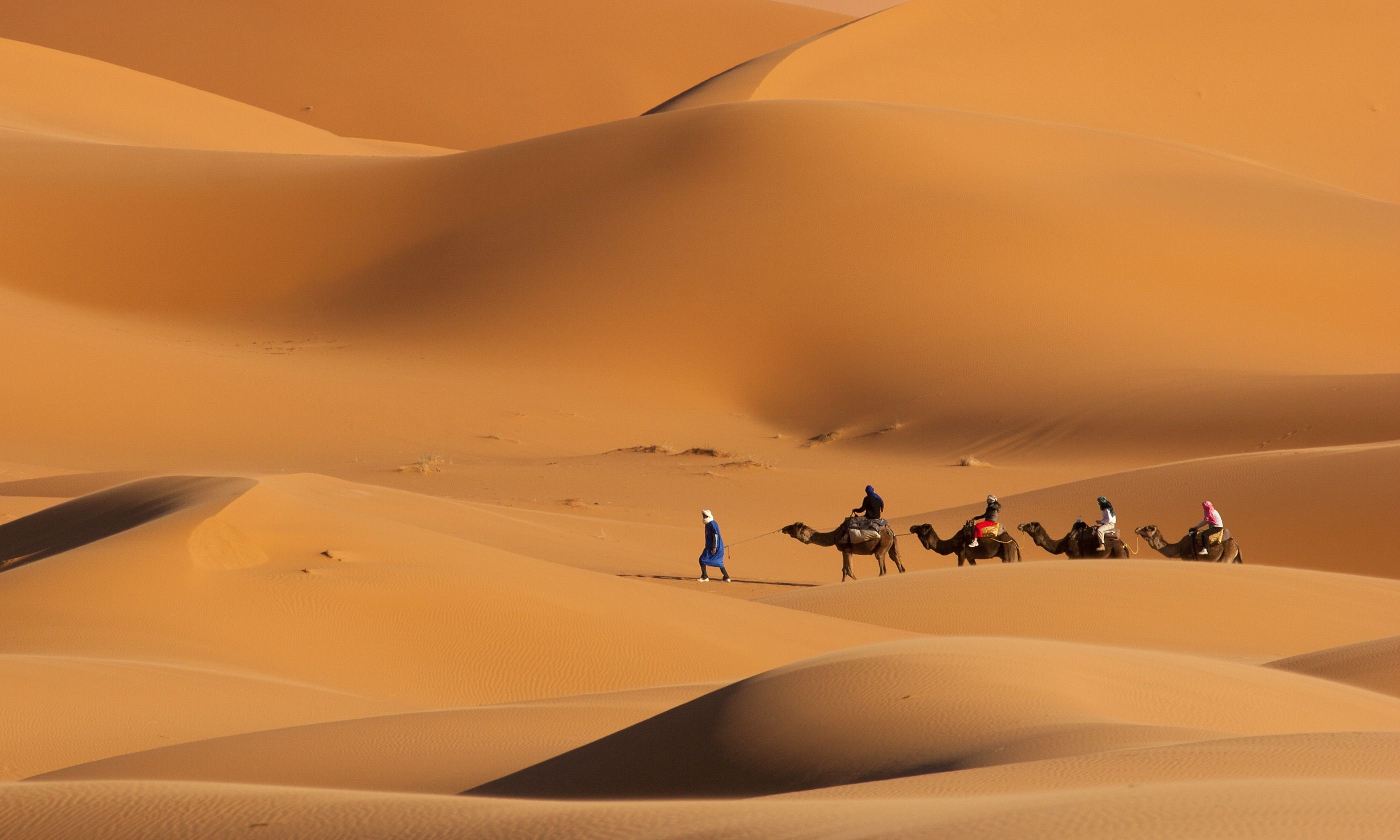 Camel trekking, Morocco (Shutterstock.com)
