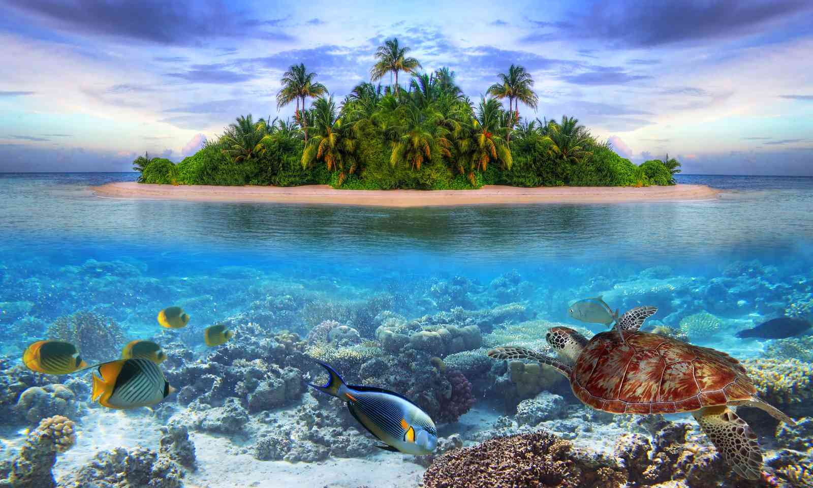 Uninhabited island in the Maldives (Dreamstime)