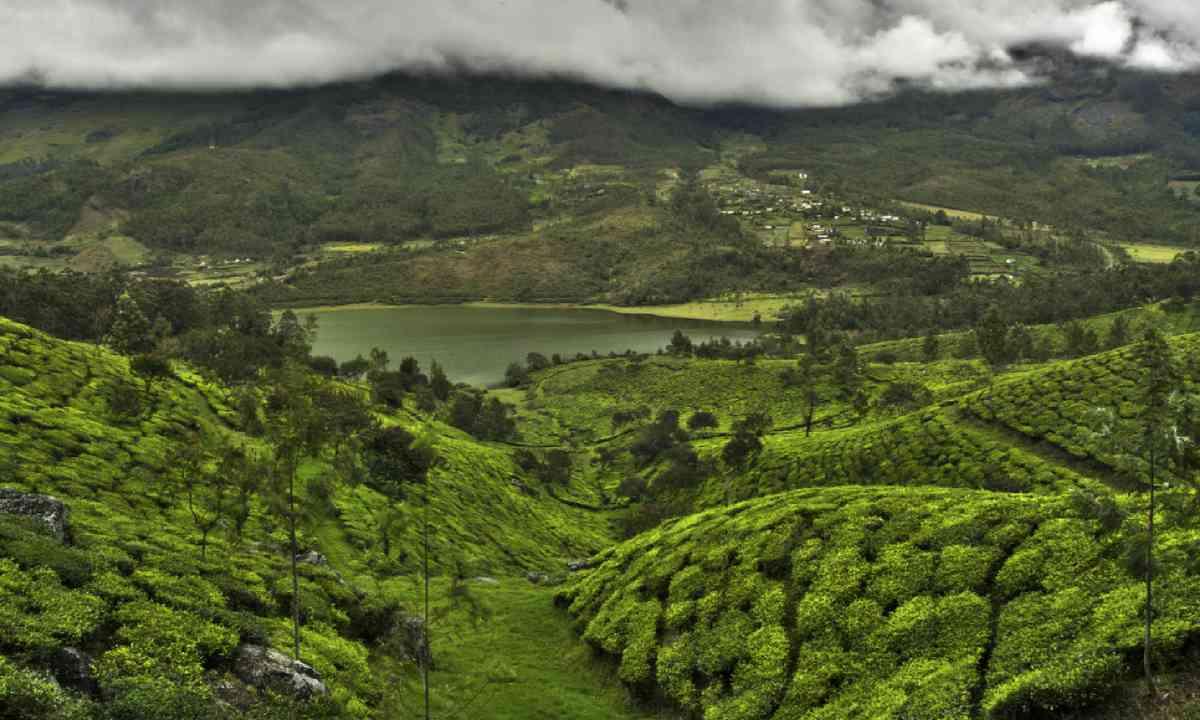 Tea plantation valley in Western Ghats (Dreamstime)