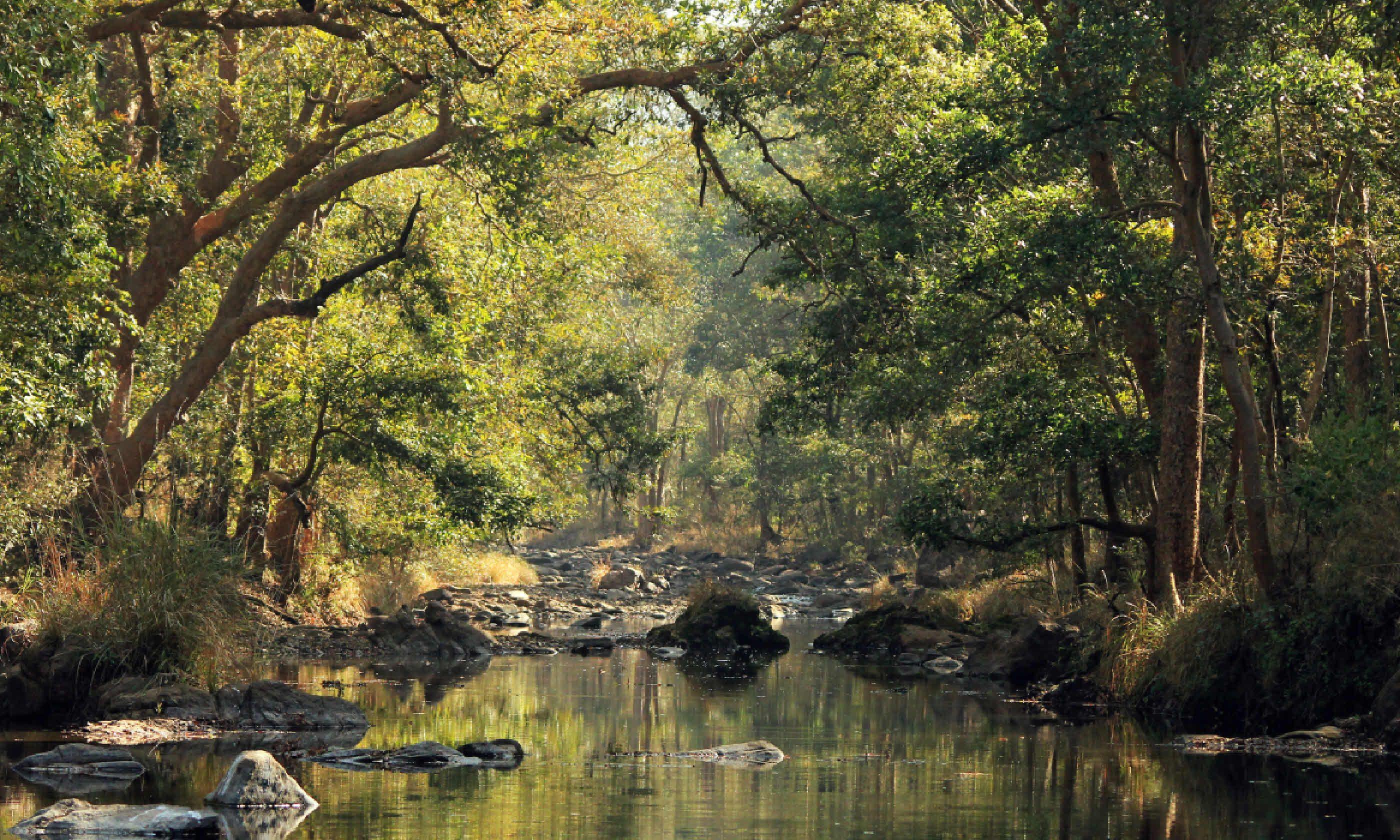 Kanha National Park, Madhya Pradesh (Dreamstime)