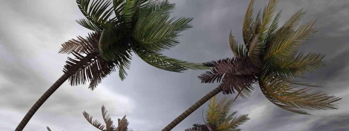 Palm trees in a hurricane (Shutterstock)