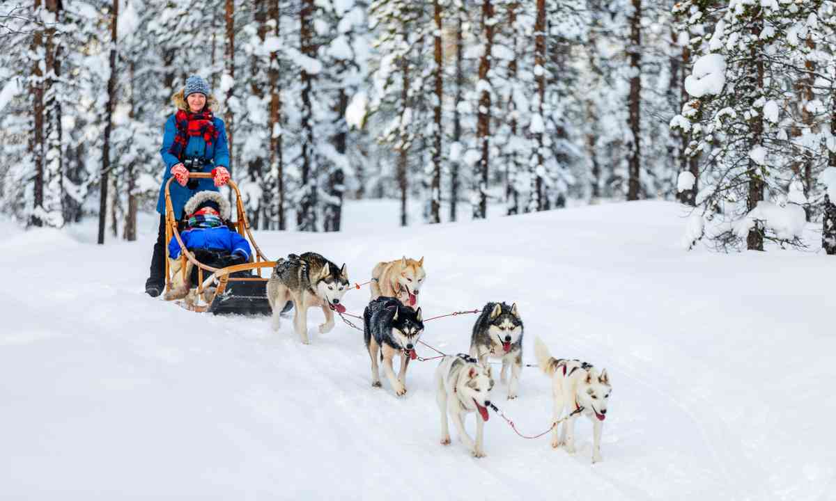 Husky safari in Finland (Dreamstime)