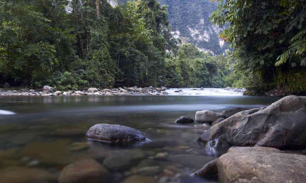 River deep in the jungle of Gunung Mulu National Park (Dreamstime)