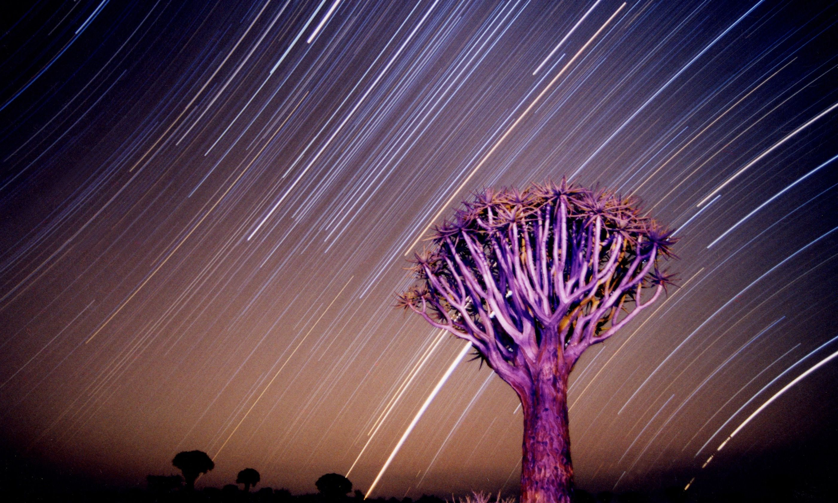Quiver Tree under night sky in Namibia (Dreamstime)