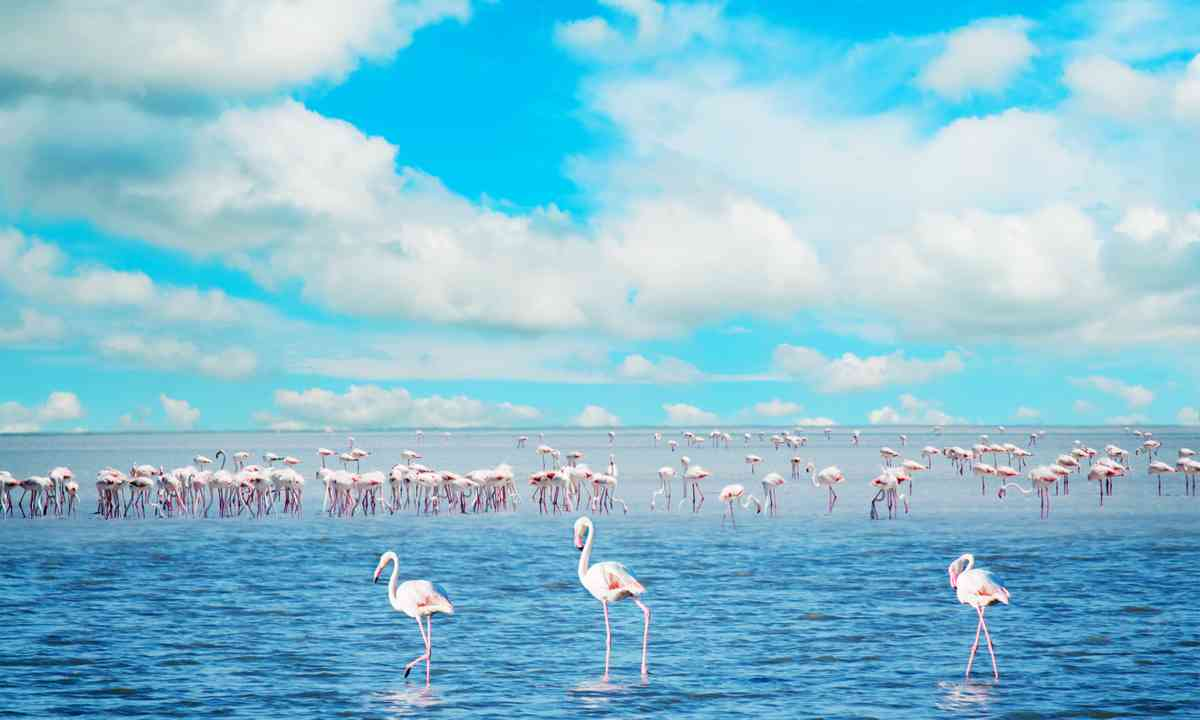 Flamingos in Sala Porcus (Dreamstime)