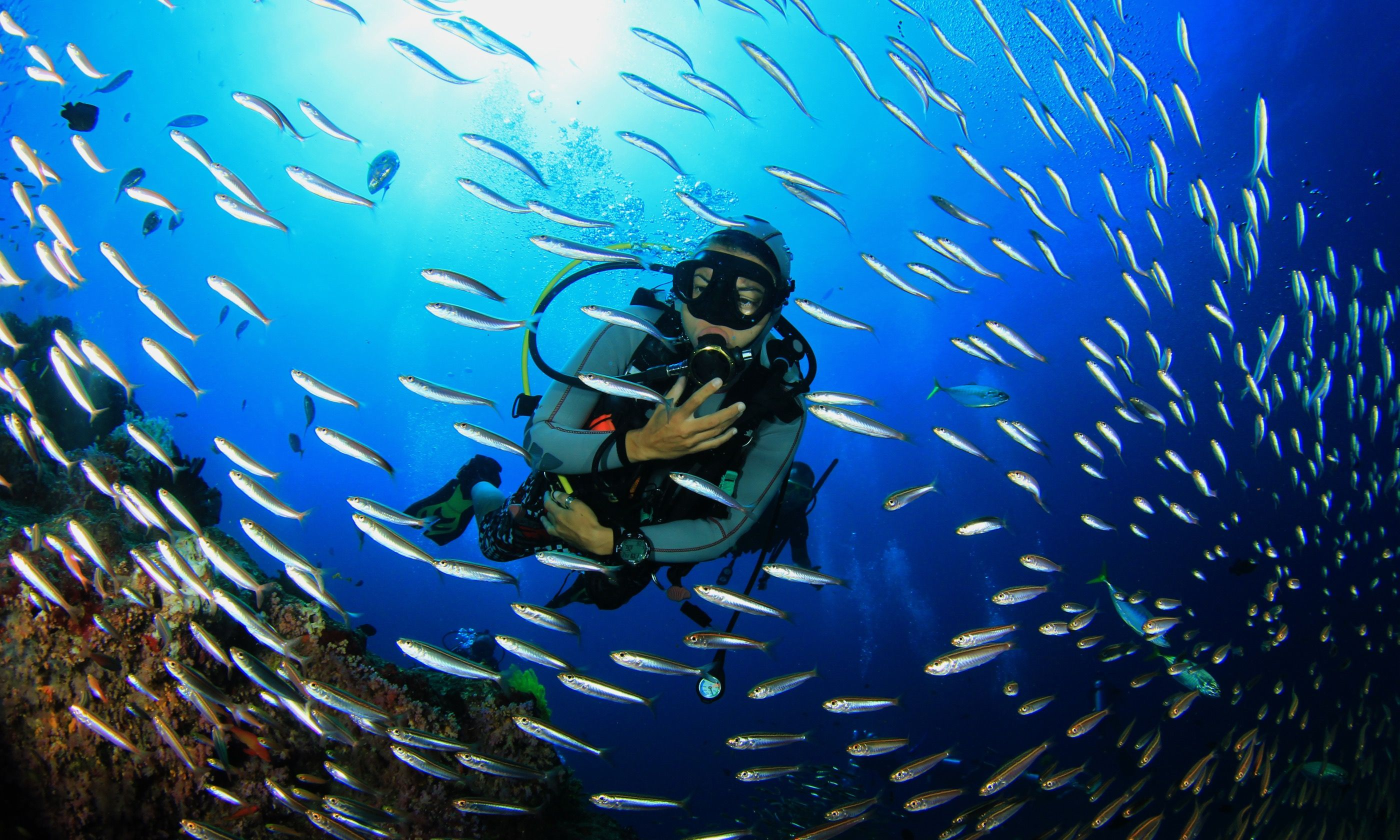 Scuba diving on coral reef (Shutterstock.com)