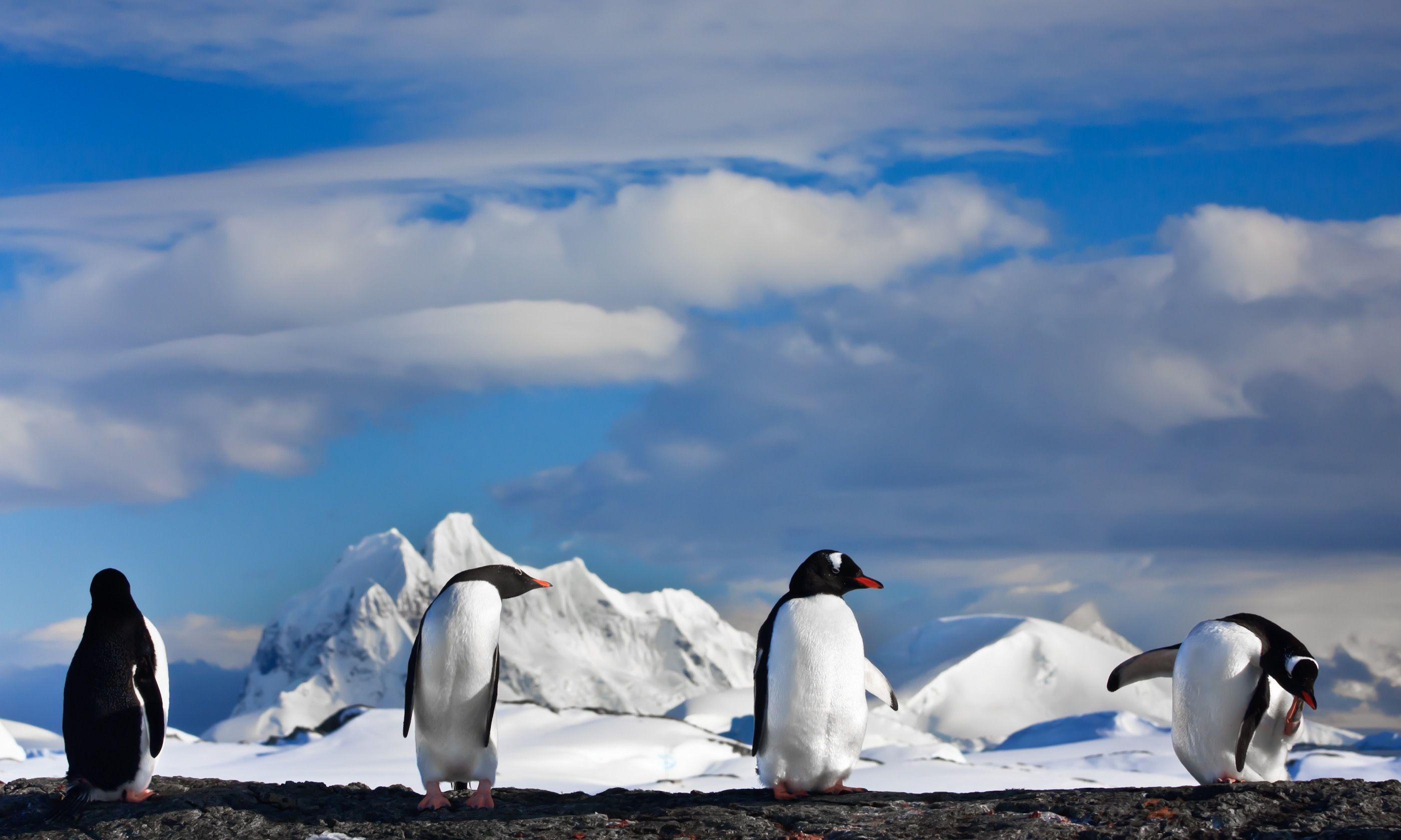Penguins on a rock (Shutterstock.com)