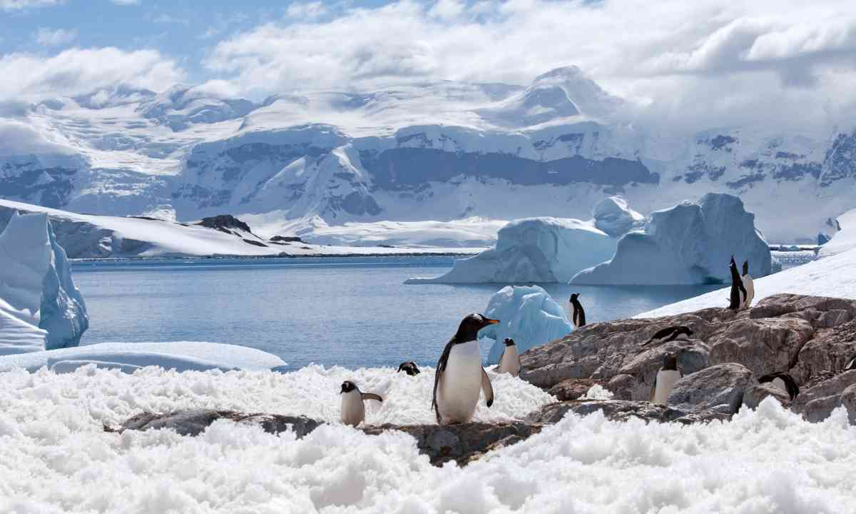 Penguins in Blue Iceberg Bay (Shutterstock.com)
