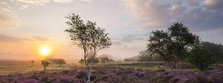 Misty sunrise over Westleton Health (Shutterstock)