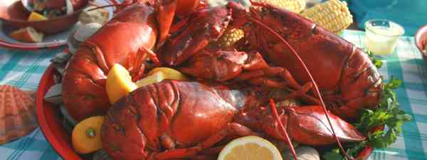 Plate of lobsters (Dreamstime)