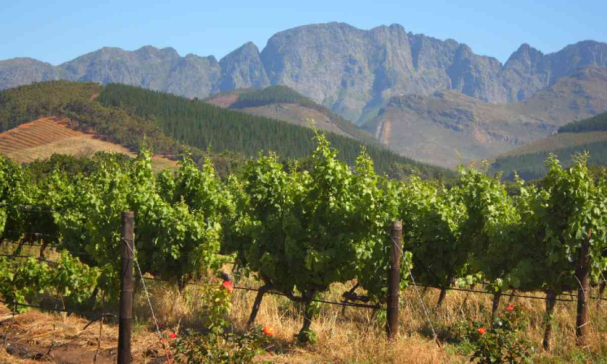 Vineyard in Montague, Route 62, South Africa (Shutterstock)