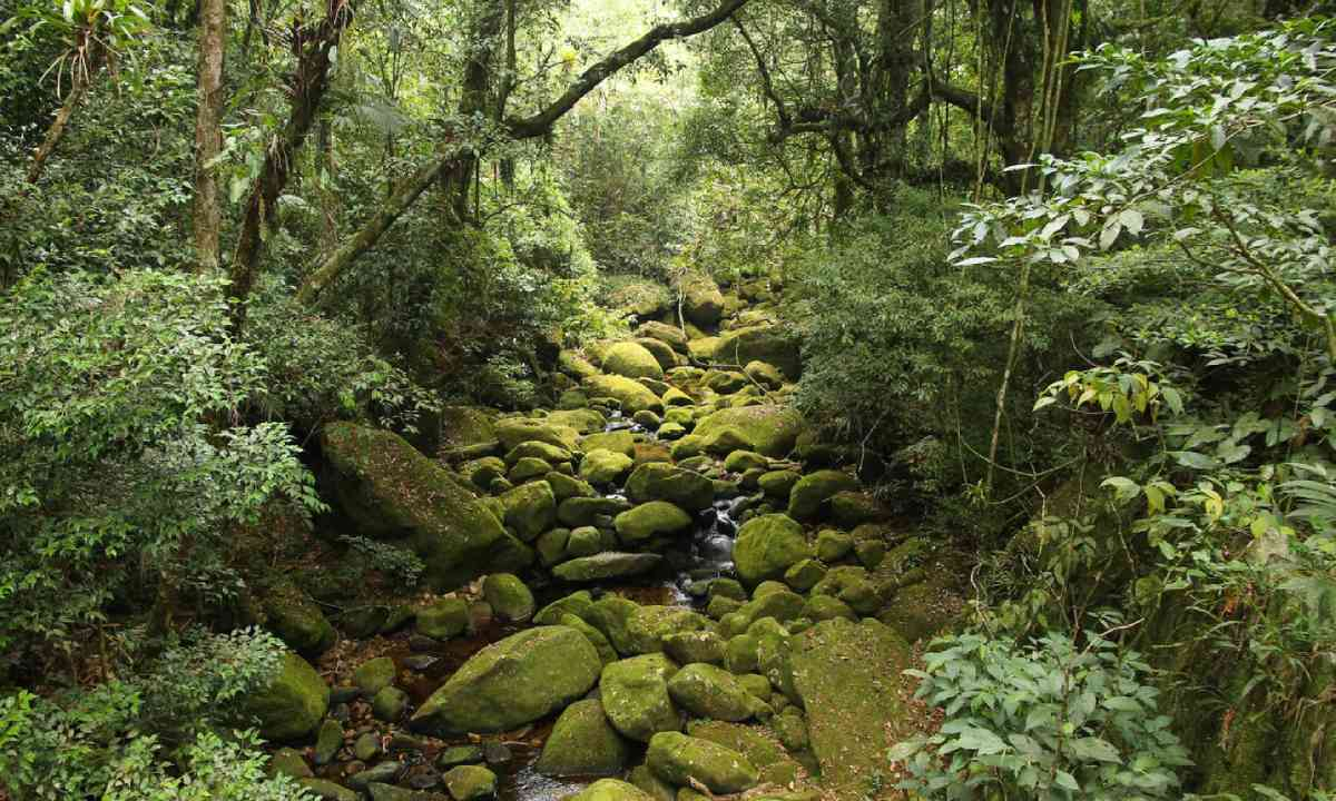 The Brazilian rainforest (Shutterstock)