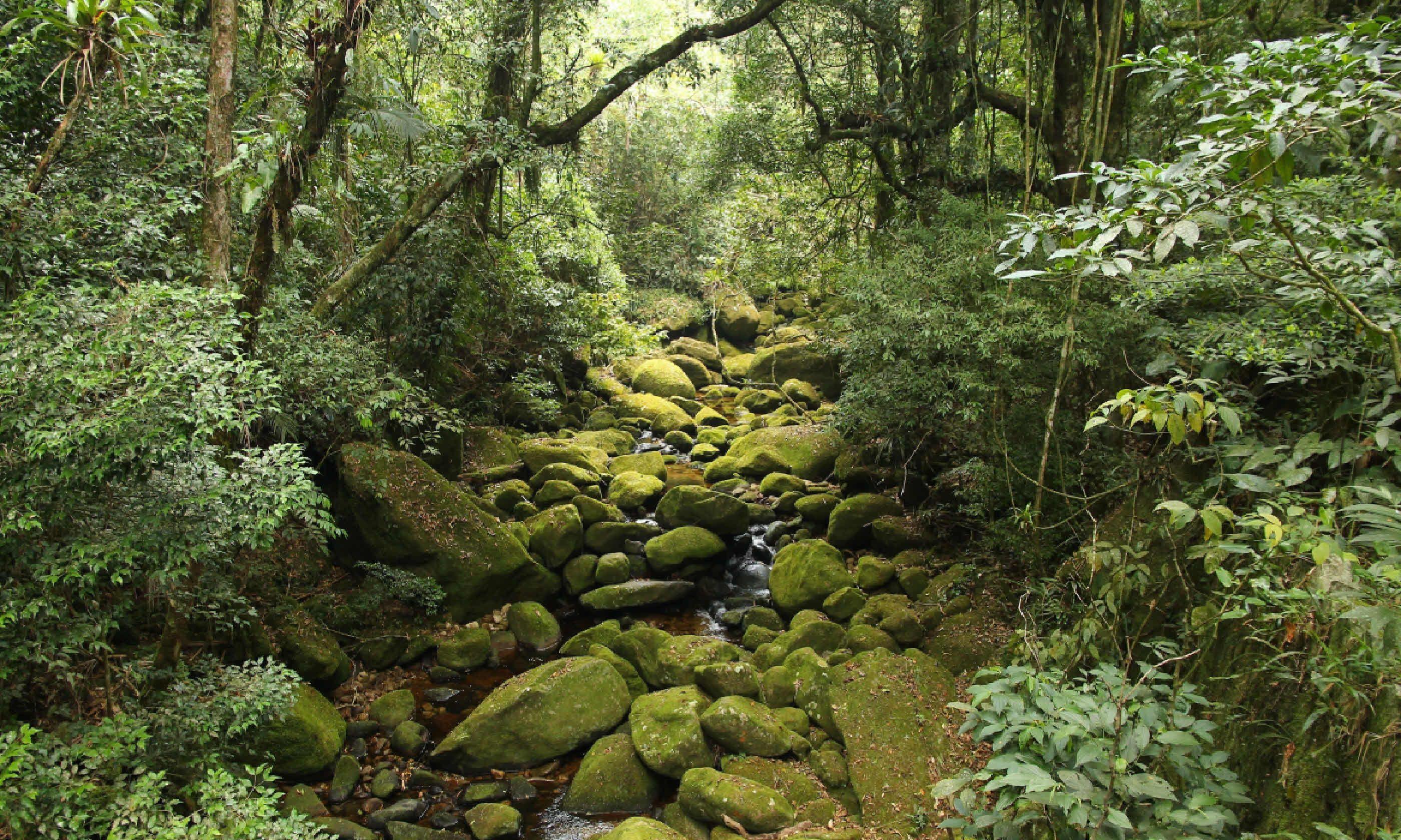 The Brazilian rainforest (Shutterstock)
