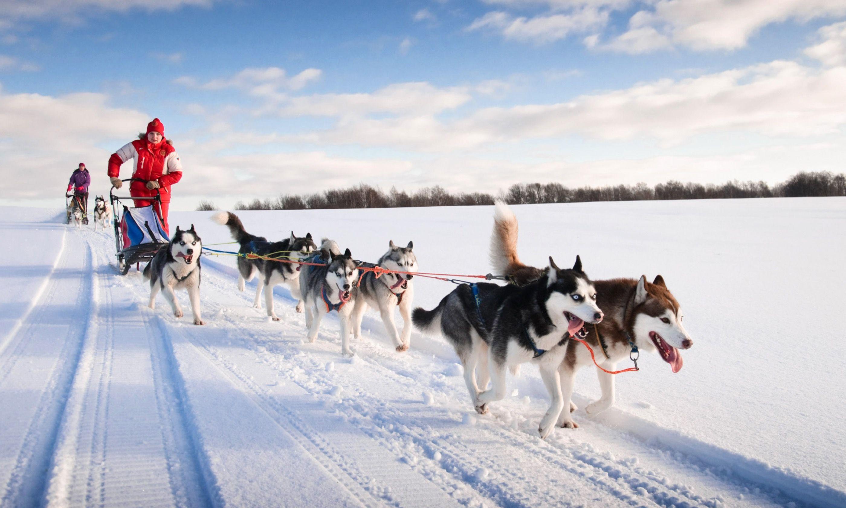 Mushing huskies (Shutterstock.com)