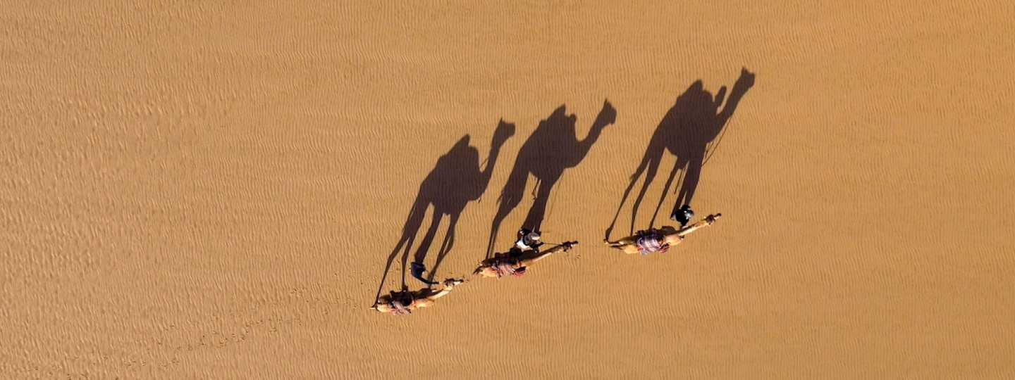 Camels in the Empty Quarter of Oman (Miguel Willis / Drone Photography And Video Masterclass)