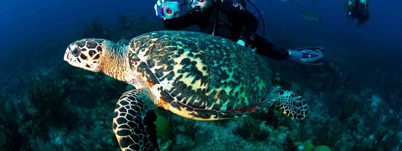 Diver at Lighthouse Reef (Belize tourist board)