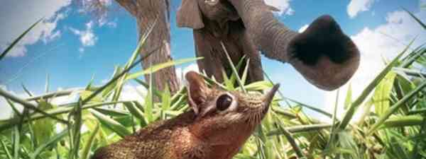 Animal stars of Hidden Kingdoms (BBC)