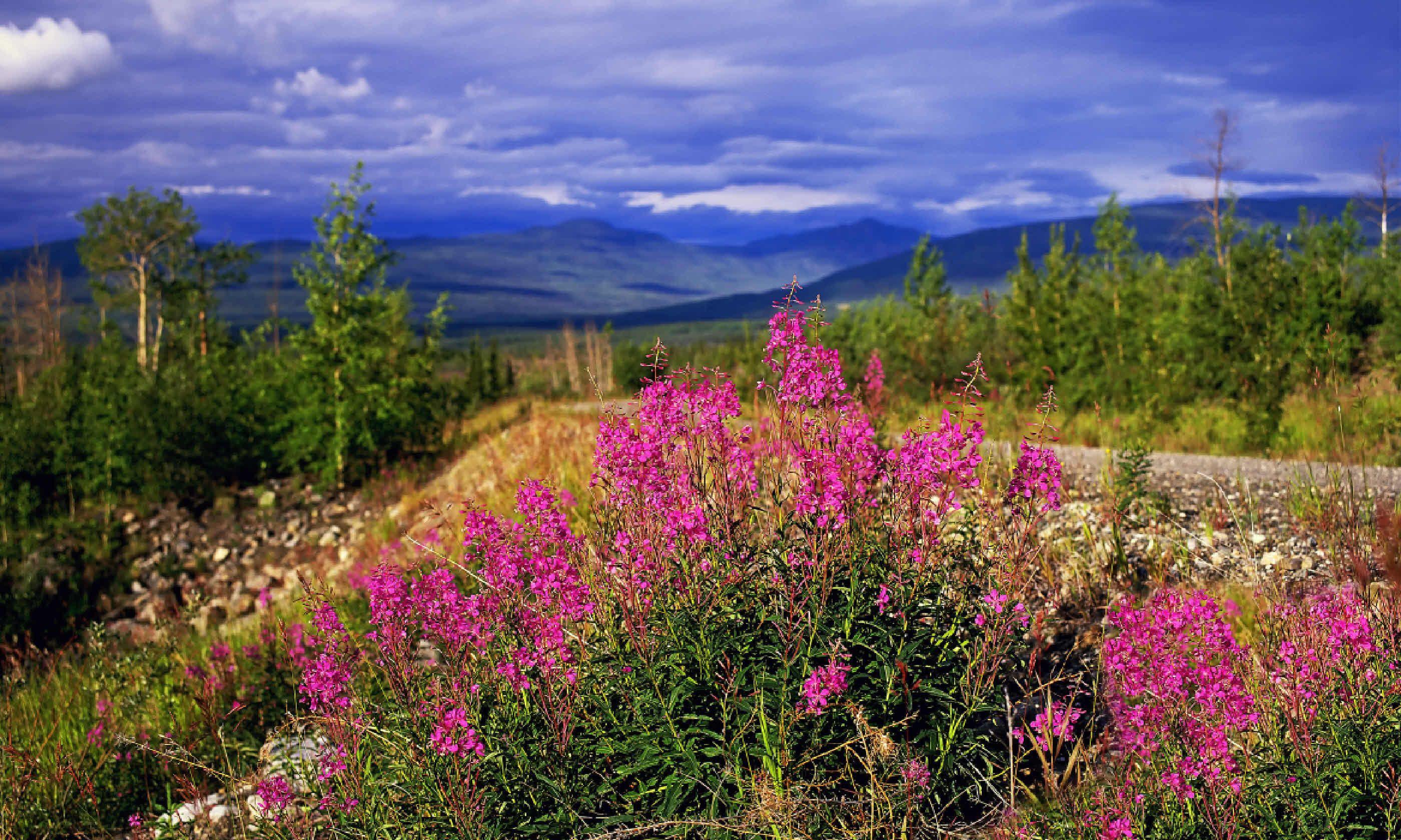 Northwest Territories, Canada (Shutterstock)