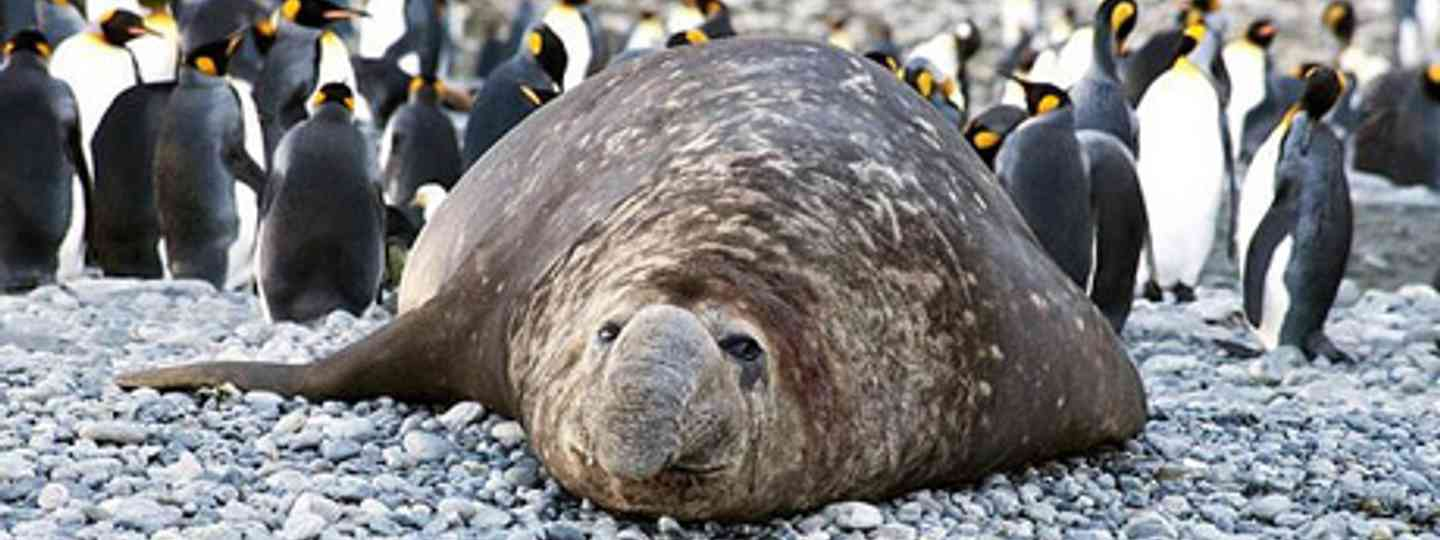 Basking next to elephant seals and penguins. Bliss (*christopher*)