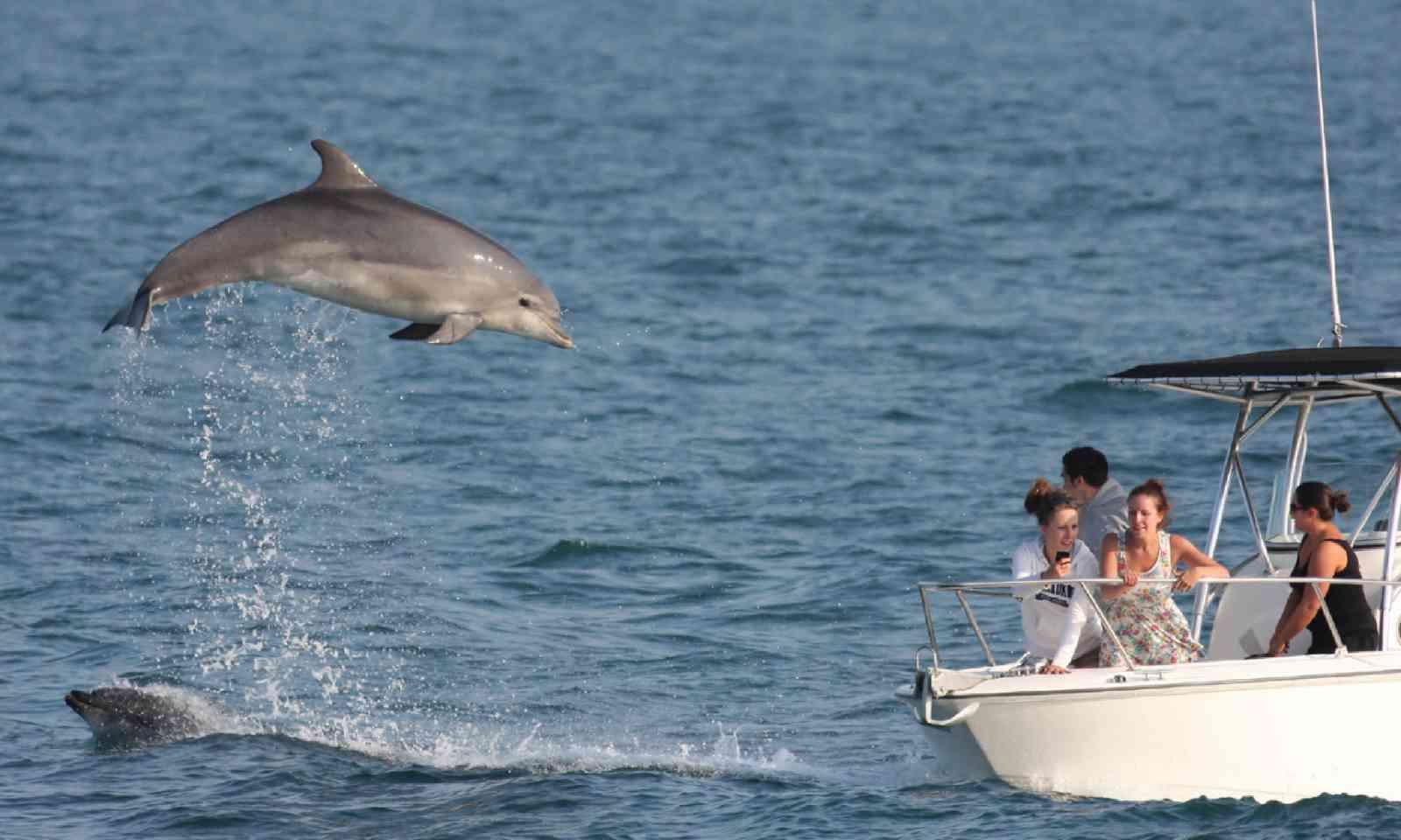 Bottlenose dolphin (Peter Moore)