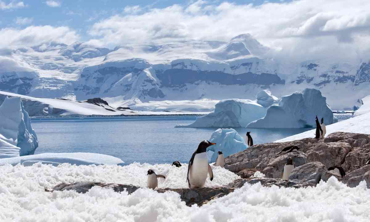 Group of penguins on an ice shelf (Shutterstock.com)
