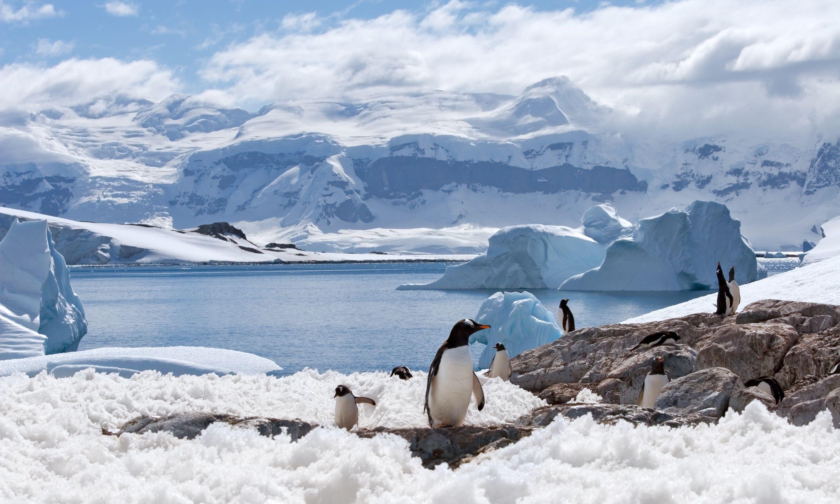 Group of penguins on an ice shelf (Shutterstock.com)