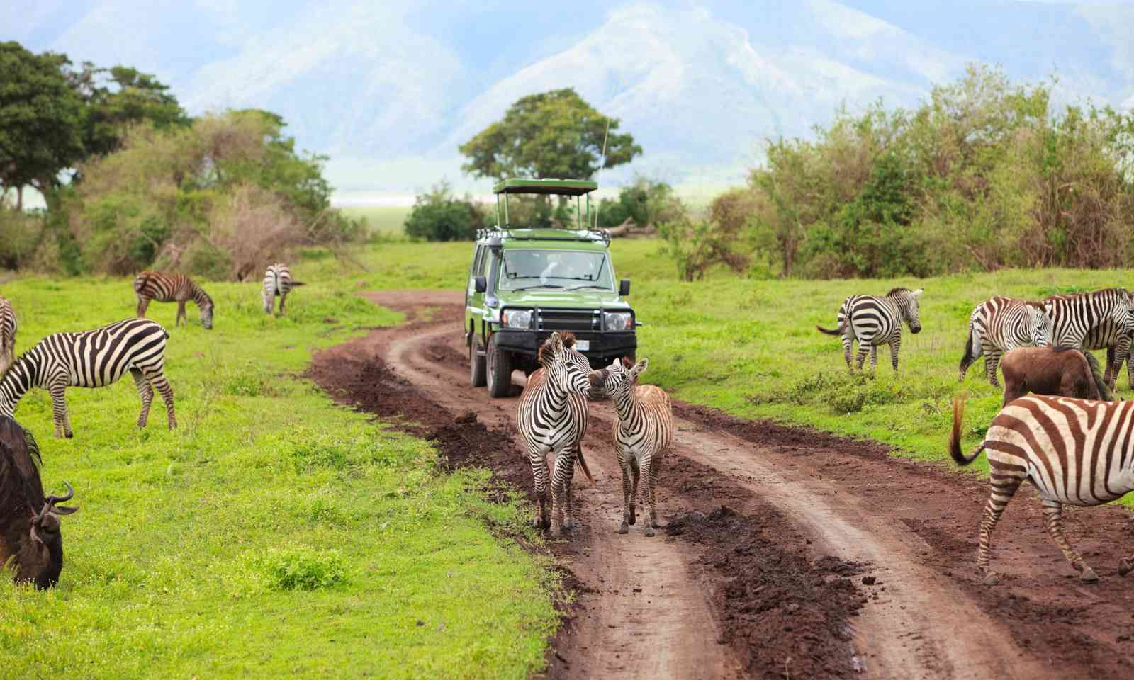 Game drive in Ngorongoro Crater (Shutterstock.com)