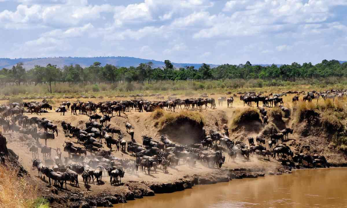 Masai Mara National Reserve (Dreamstime)