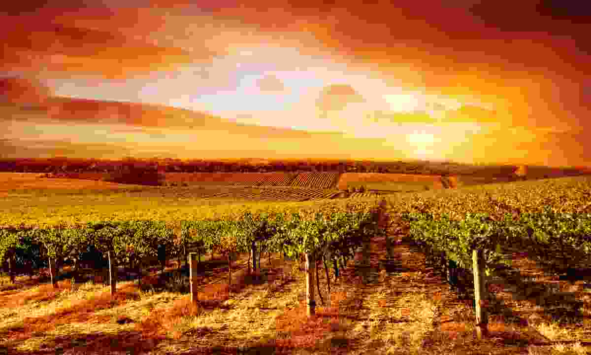 Sunset over a South Australian vineyard (Dreamstime)