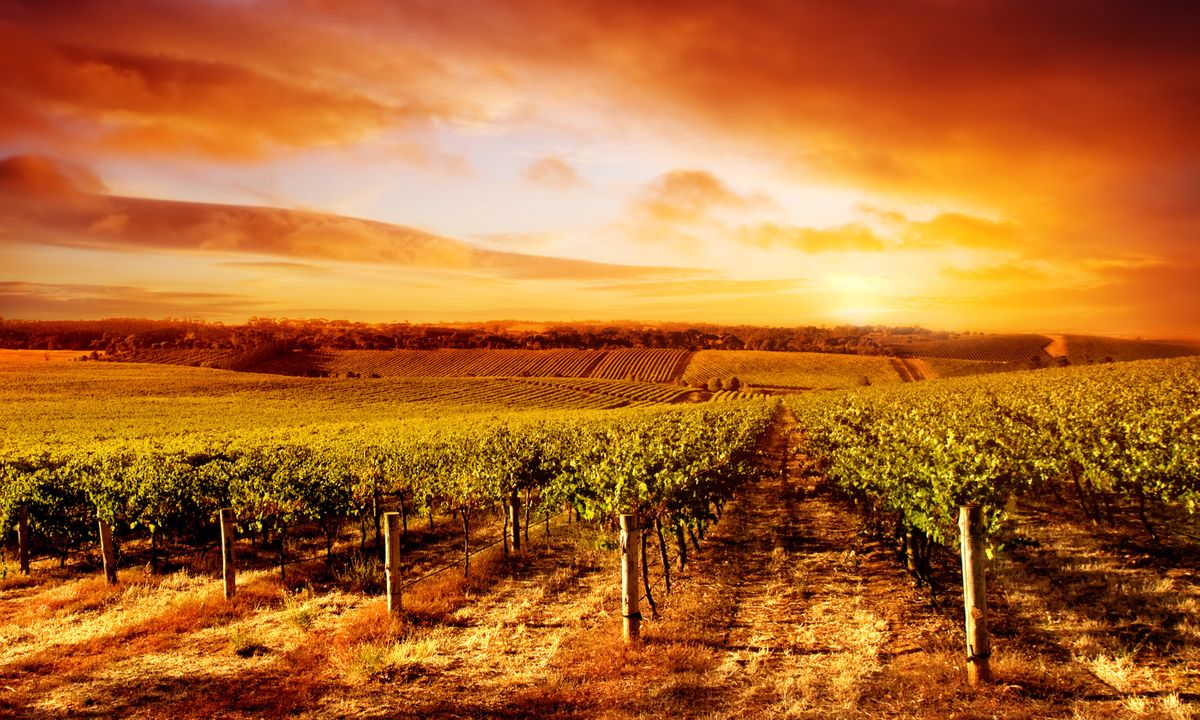 Sunset over a South Australian vineyard (Dreamstime)