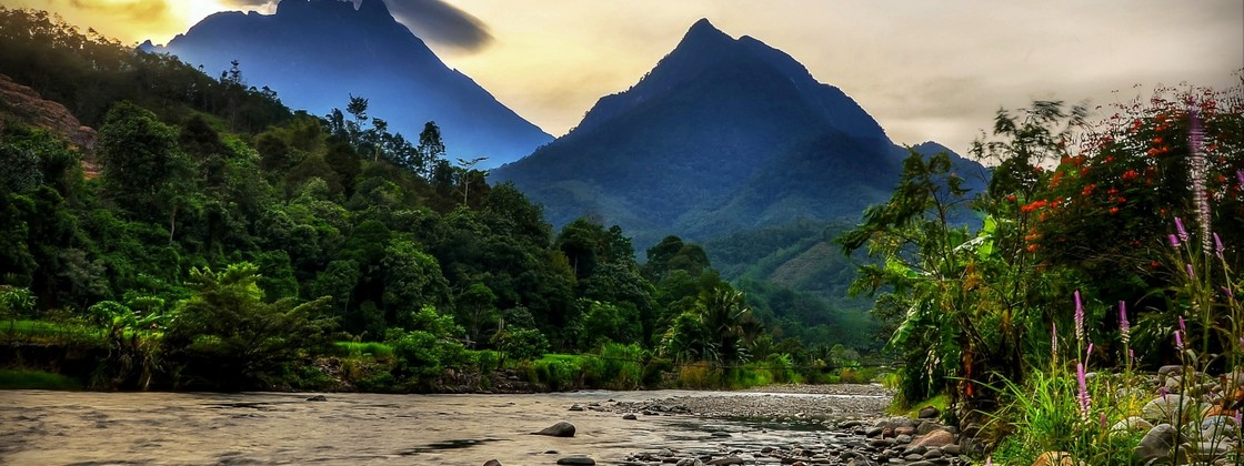 Image result for The wildness of Borneo