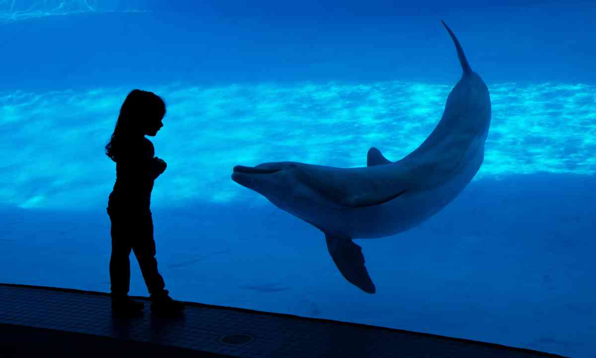 Young child closely observing a dolphin (Dreamstime)