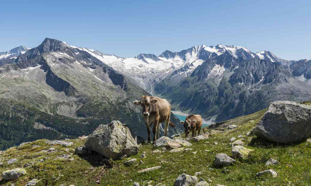 Your fellow hikers in Zillertal (Dreamstime)