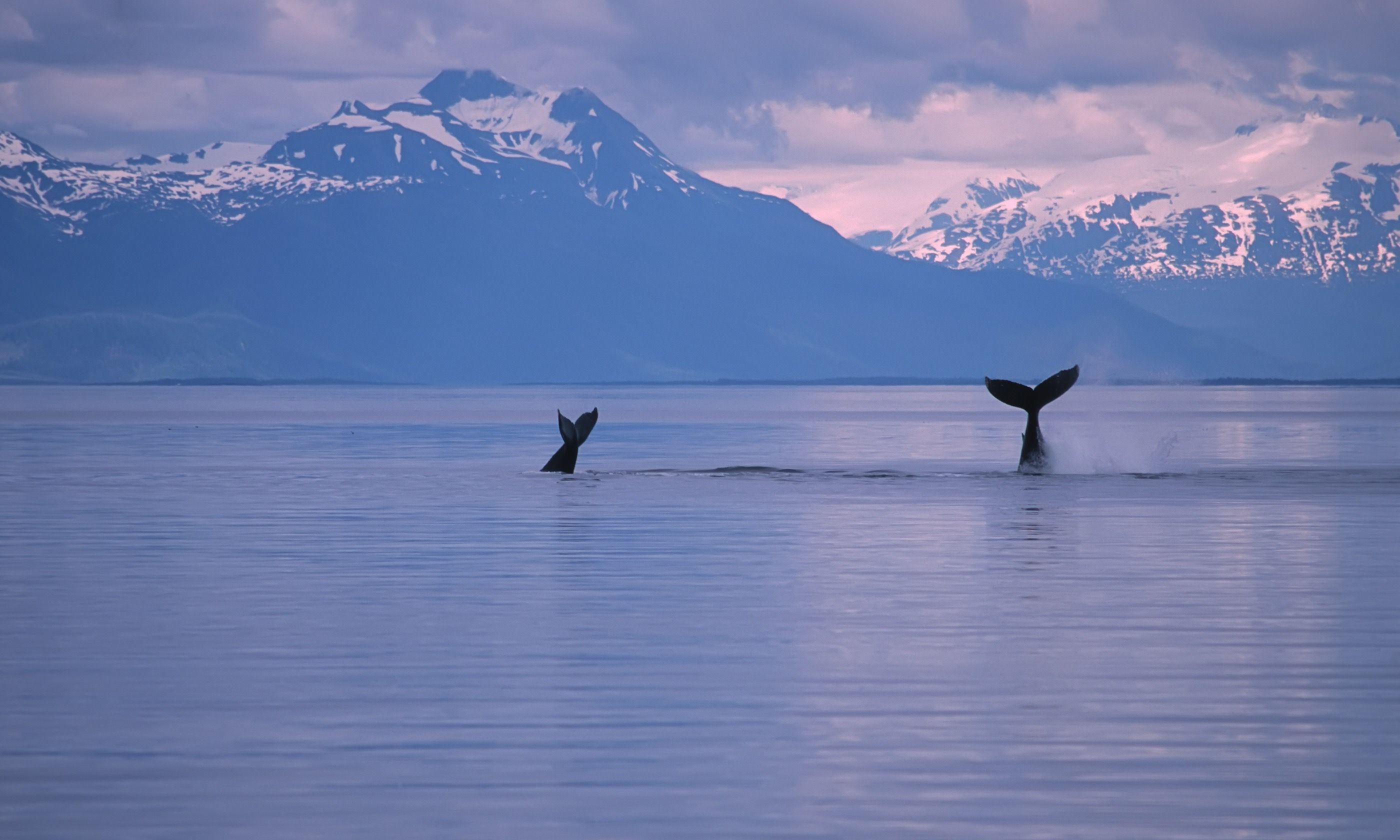 Whale tails in Alaska (Dreamstime)
