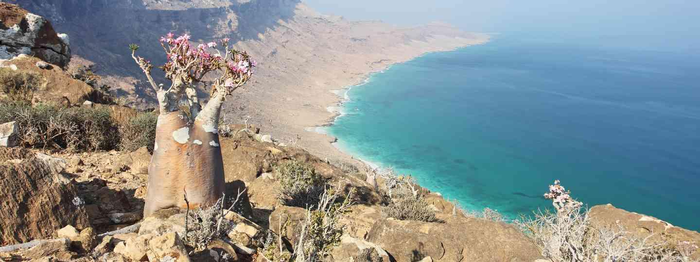 Adenium socotranum on Socotra Island (Shutterstock.com. See main credit below)