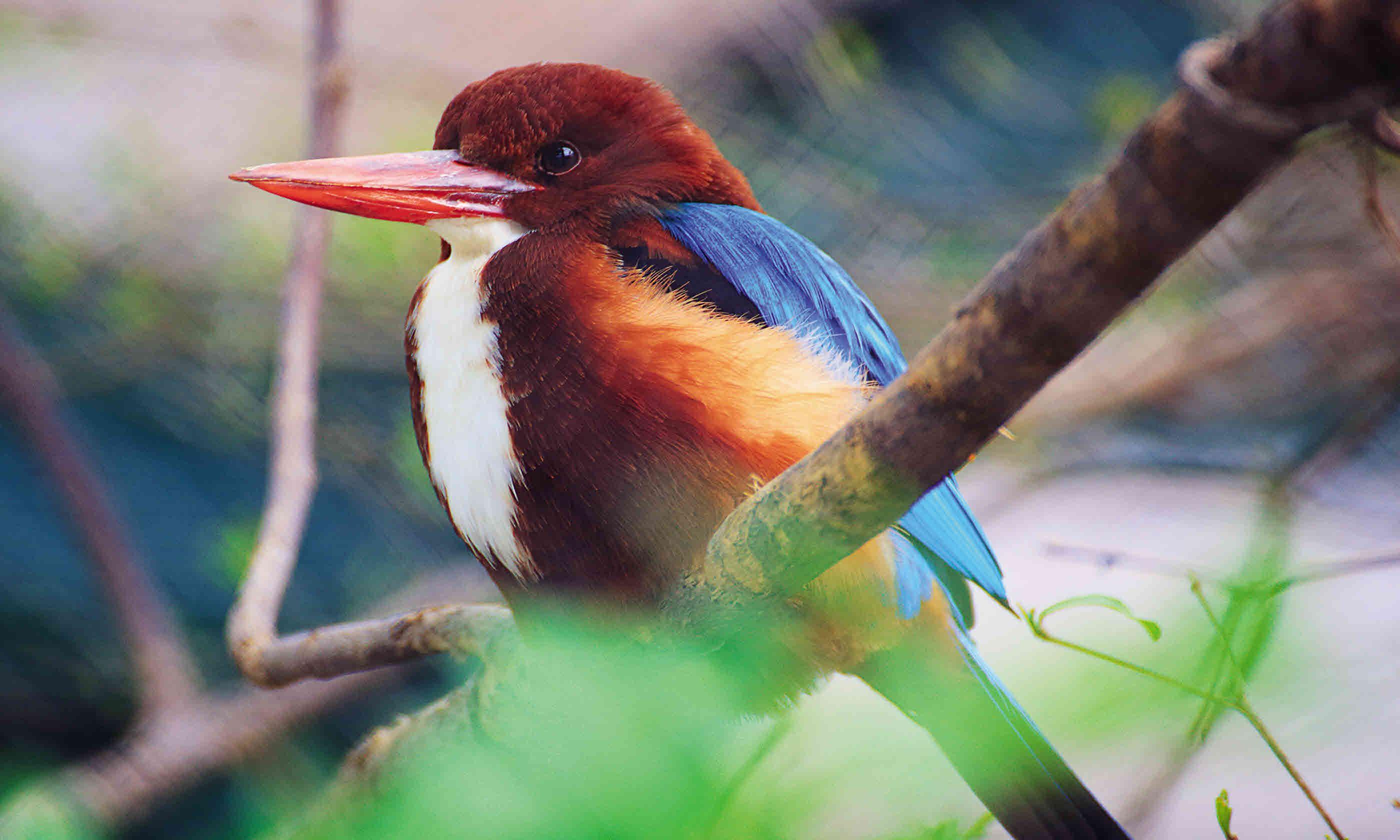 Birdlife in Rajasthan (Dreamstime)
