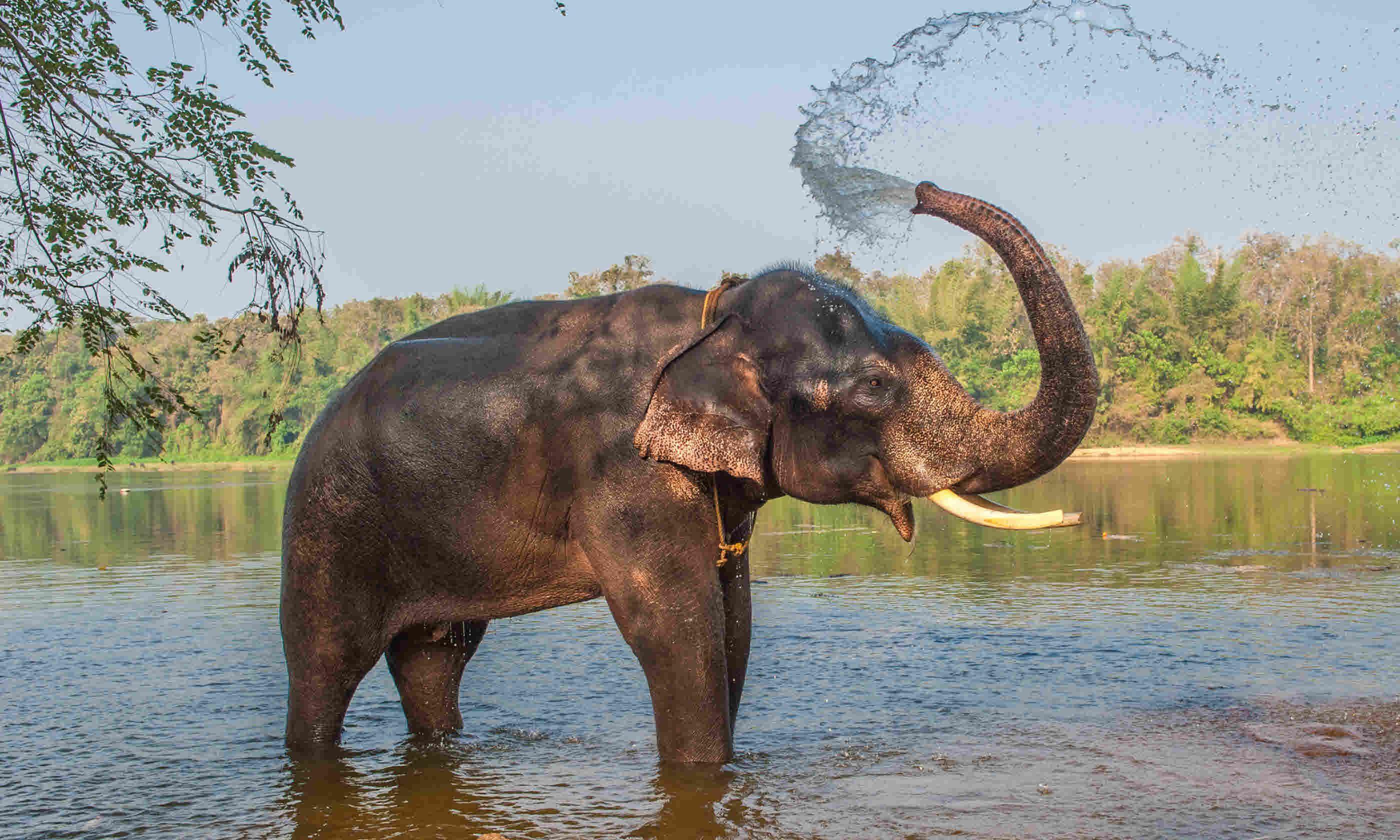 Elephant bathing in Kerala, India (Shutterstock)