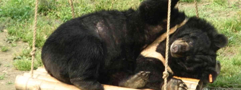 Bear on a swing (Suzie Marsh)