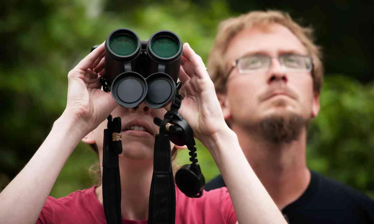 On the lookout in Monteverde (Shutterstock.com)