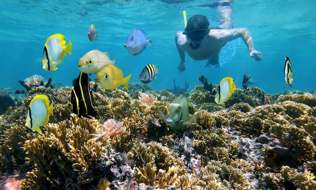 Snorkelling (Shutterstock.com)