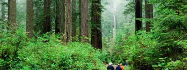 Redwood National Park (Dreamstime)