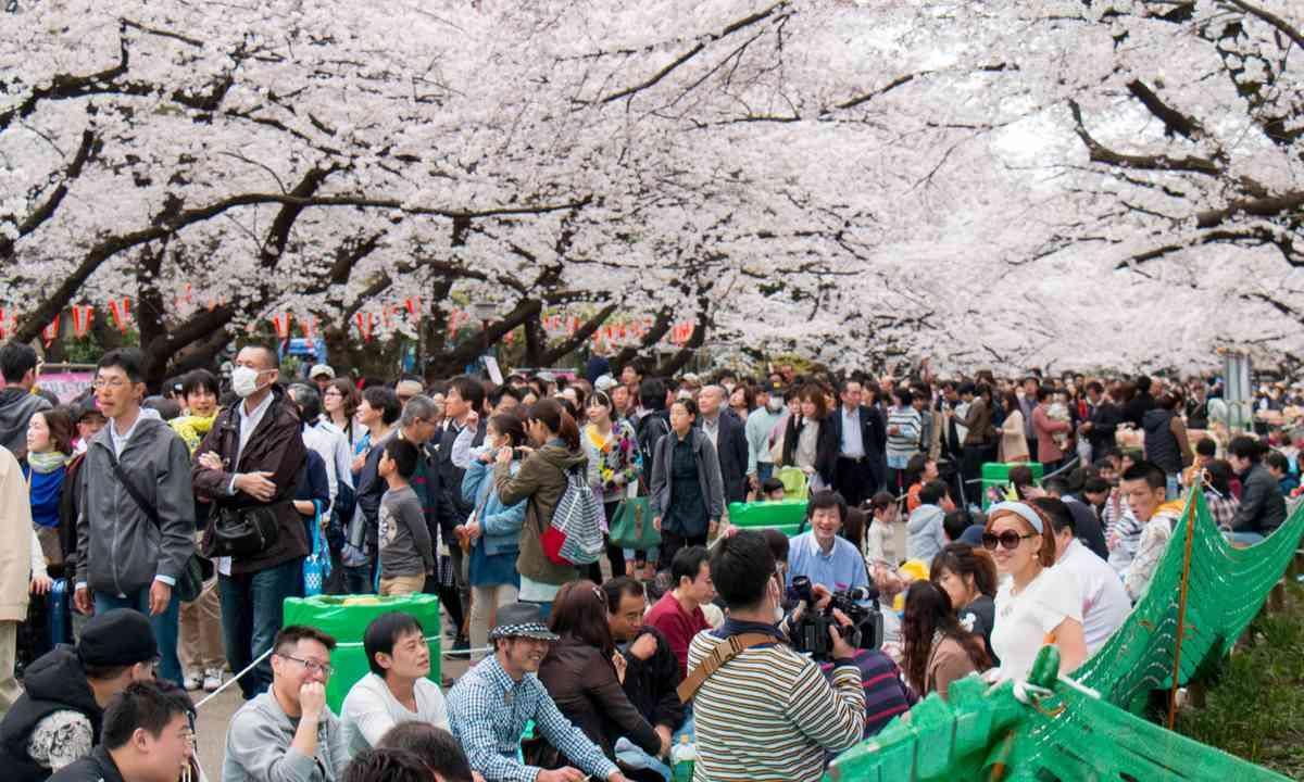 Hanami party in Ueno Park (Dreamstime)