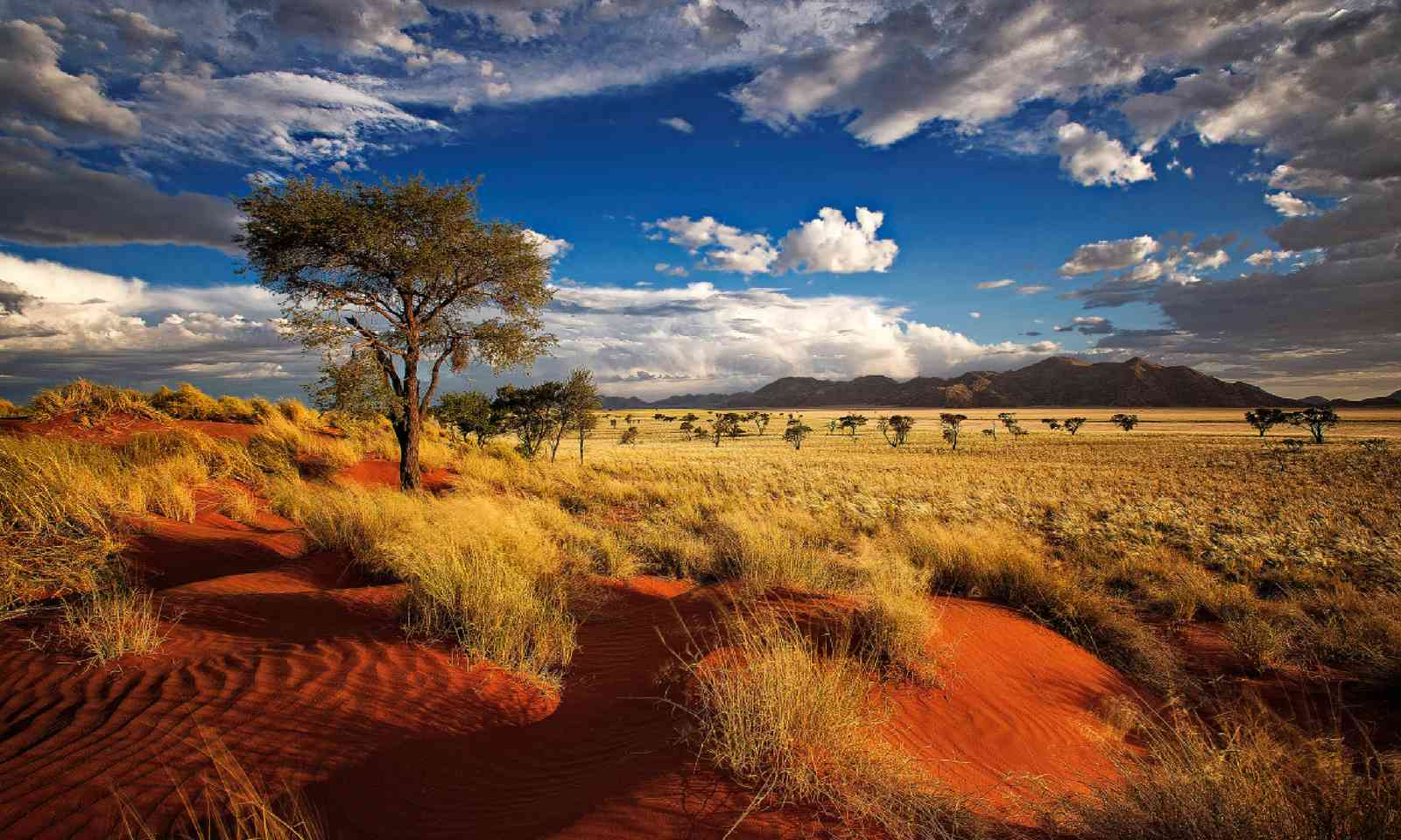 Nature reserve, Namibia (Shutterstock)