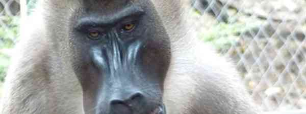 Hello monkey (Marie Javins)